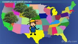 Native Species: Definition & Examples