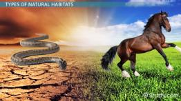 What is a Natural Habitat? - Definition & Habitat Destruction
