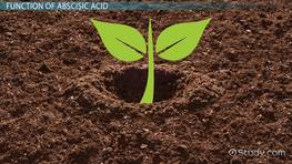 Abscisic Acid in Plants: Definition & Function