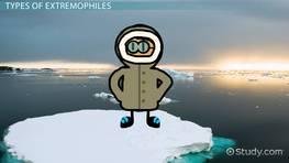 Extremophiles: Definition & Examples