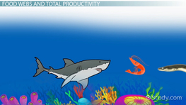 Oceanic Food Webs & Nutrient Productivity