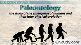 Overview of Physical Anthropology