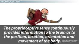Proprioception: Definition & Exercises