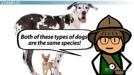 Species Definition: Lesson for Kids
