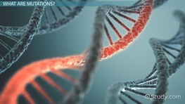Beneficial Mutations: Examples & Effects