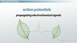 Plant Responses to Mechanical Stimuli