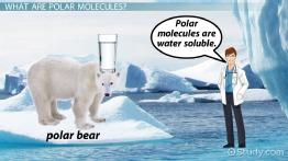 Polar Molecule: Definition & Examples