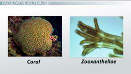 Mutualistic Relationships: Examples & Types