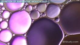 Amphipathic Molecules: Definition & Example