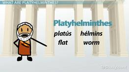 Platyhelminthes: Body Cavity & Movement