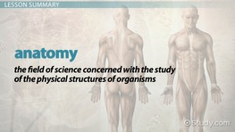 What is Anatomy? - Definition & History