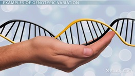 Genotypic Variation: Definition & Example
