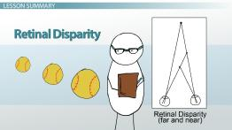 Retinal Disparity in Psychology: Definition & Examples