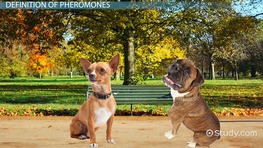 What Are Pheromones? - Definition, Function & Examples