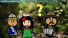 Abiotic Factors of the Tropical Rainforests