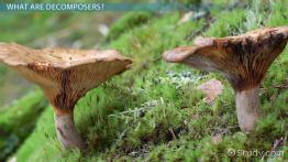 What is a Decomposer? - Definition & Examples