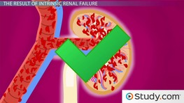 Acute Renal Failure - Intrinsic Renal Failure & Its Consequences