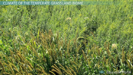 Temperate Grassland Biome: Climate, Plants, Animals & Locations