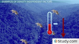 Density-Independent Factors: Examples & Definition