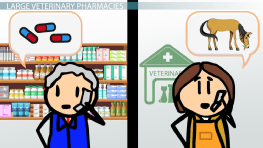 The Pharmacy in a Veterinary Clinic