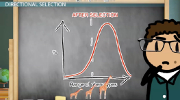 What is Directional Selection? - Examples, Definition & Graph