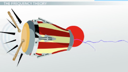 Frequency Theory of Hearing: Definition & Explanation
