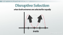Disruptive Selection: Example, Definition & Graph