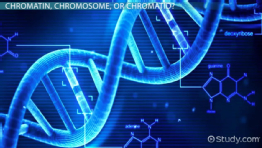 Sister Chromatids: Definition & Concept