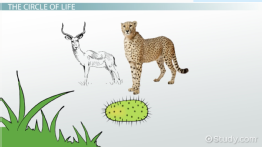 predator prey relationship within the ecosystem in rainforest