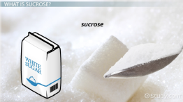 What is Sucrose? - Function, Structure & Chemical Equation
