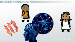 Episodic Memory: Definition & Examples