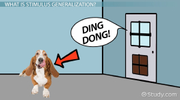 Stimulus Generalization: Definition & Explanation