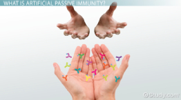 Passive Immunity: Definition & Examples