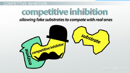 Competitive Inhibition of Enzymes: Definition & Examples