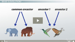 Divergent & Convergent Evolution: Definitions & Examples