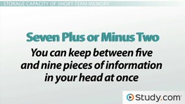Short-Term Memory: How STM Works