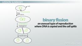 Binary Fission: Definition, Steps & Examples