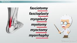 Surgical Procedures of the Musculoskeletal System: Terminology