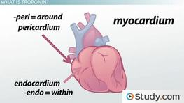 The Importance of Cardiac Enzymes