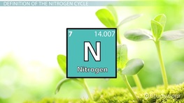 The Nitrogen Cycle: Definition, Facts & Steps