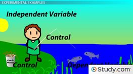 Identifying & Interpreting Independent & Dependent Variables