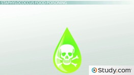 Food Poisoning from Staphylococcus Aureus Bacteria