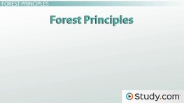 What Is Sustainable Forest Management? - Definition and Examples