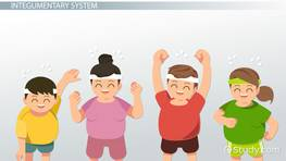 Effects of Physical Activity on Body Systems