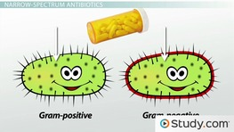 Types of Antibiotics: Bactericidal vs.Bacteriostatic & Narrow Spectrum vs. Broad Spectrum