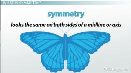 Types of Symmetry in Animals