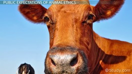 Veterinary Obligations to the Animal Kingdom