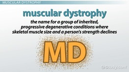Vocabulary of Myasthenia Gravis & Muscular Dystrophy