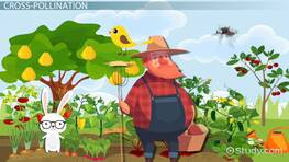 What is Pollination? - Lesson for Kids