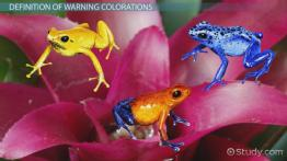 Warning Coloration in Animals: Examples, Overview